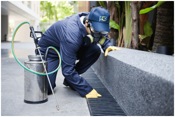 pest control services in Dubai